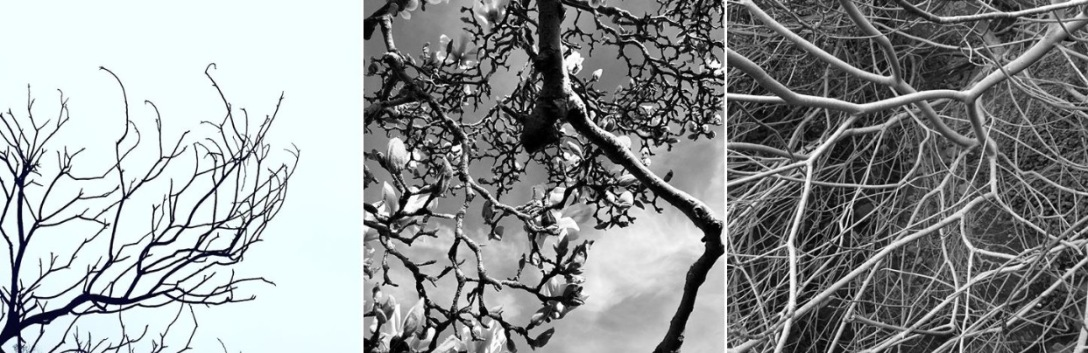 SpiritandBones-trees-FullSizeRender