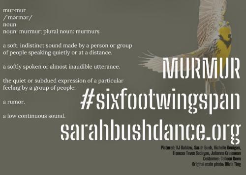 MURMUR #sixfootwingspan
